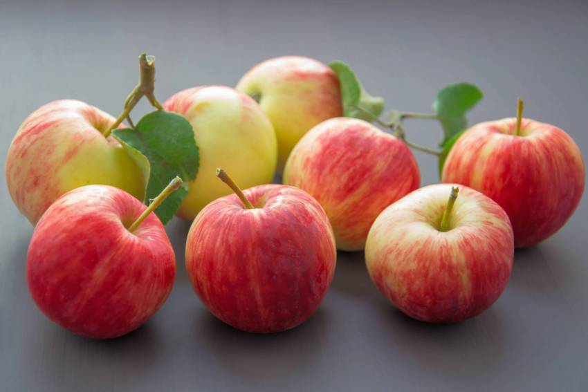 Apples are a healthy road trip snack. Skip the fast food, here is a list of delicious, filling, nutritious foods that are easy to pack in your car for a road trip to Florida. Must Do Visitor Guides | MustDo.com