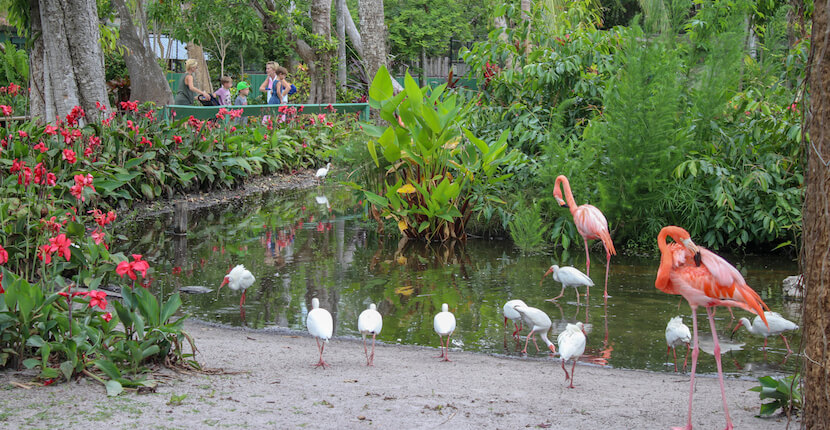 Everglades Wonder Gardens botanical garden, flamingos, alligators and other birds and reptiles Bonita Springs, Florida attraction near Naples and Fort Myers. Must Do Visitor Guides | MustDo.com. Photo by Nita Ettinger.