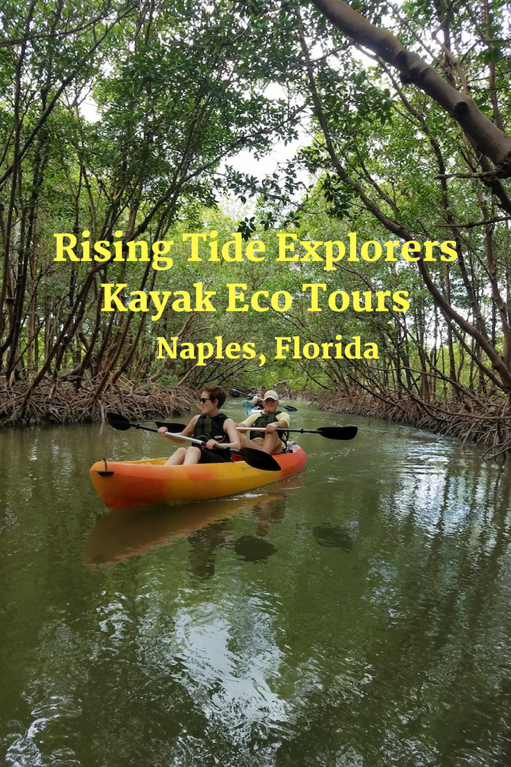 Join the professional biologists of Rising Tide Explorers on a kayaking adventure through mangroves and Rookery Bay in Naples and Marco Island, Florida.