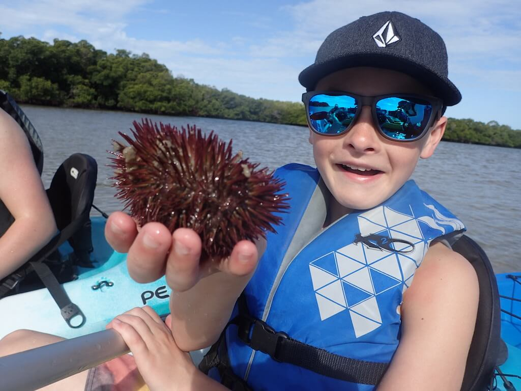 Sea Urchin found on a kayaking adventure through the mangroves and Rookery Bay in Naples and Marco Island, Florida. Must Do Visitor Guides.