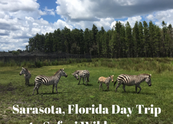 Safari Wilderness in Lakeland, Florida is an easy day trip from Sarasota. What to expect when you visit. Must Do Visitor Guides | MustDo.com