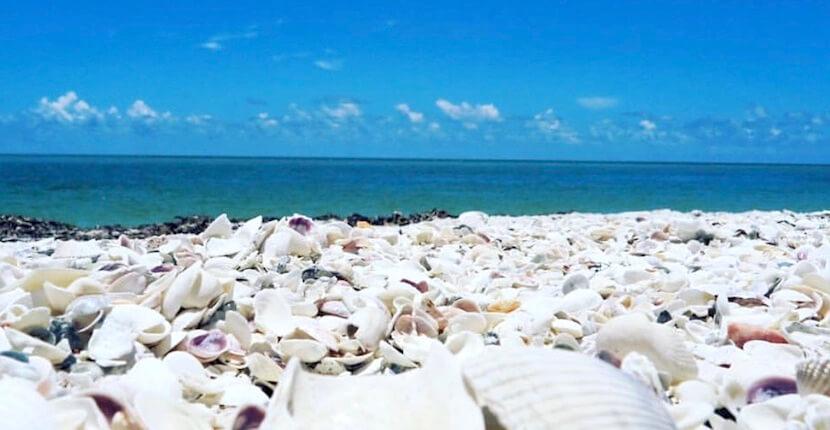 Captiva Cruises shelling, sightseeing, sunset sailing, and wildlife tour boat cruises around Boca Grande, Cayo Costa, Sanibel and Captiva Island, Florida. Must Do Visitor Guides | MustDo.com