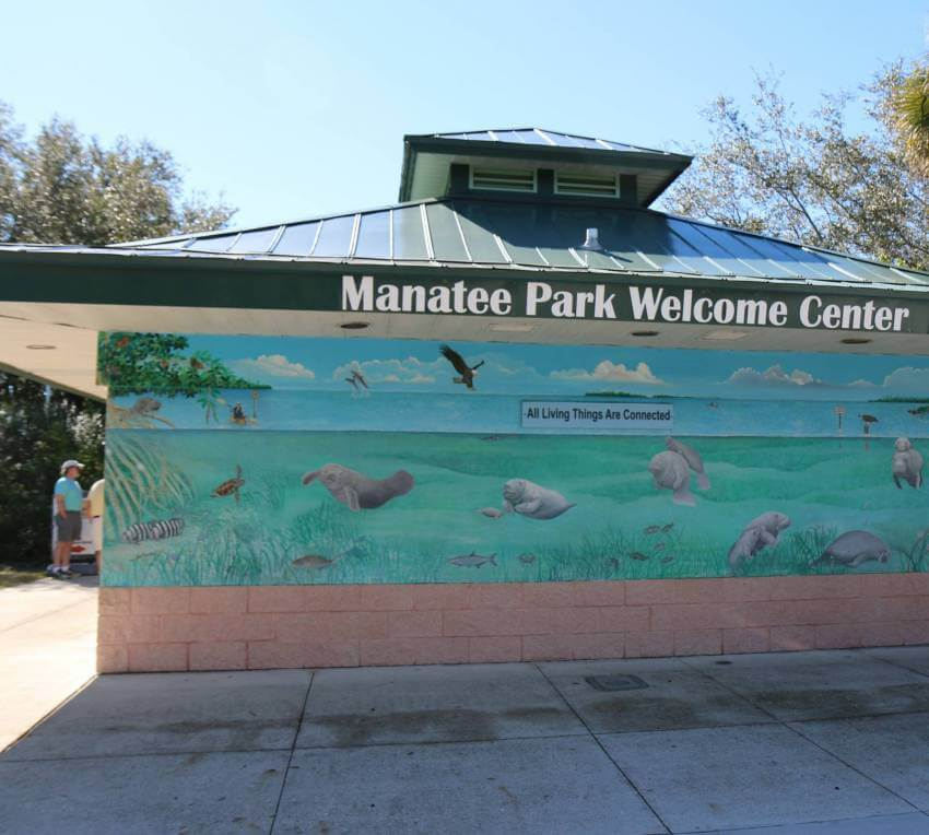 See manatees in the wild at Manatee Park in Fort Myers, Florida. Photo by Lauren Ettinger. Must Do Visitor Guides | MustDo.com