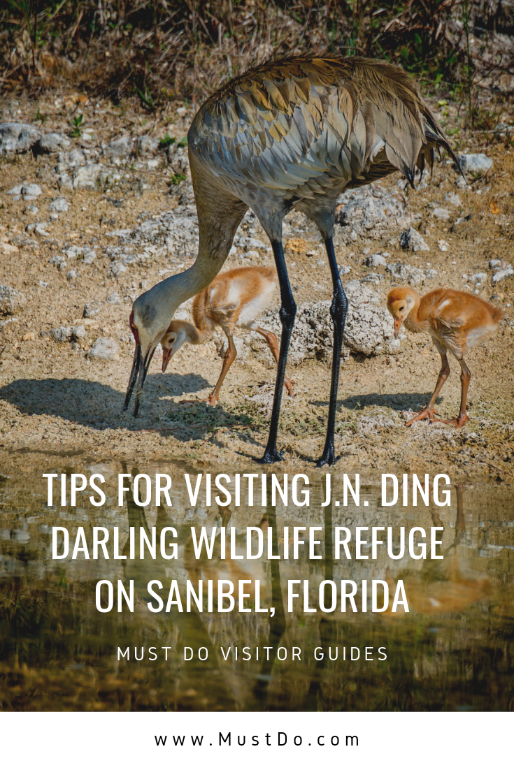 Great Heron with chicks. Tips for visiting J.N. Ding Darling Wildlife Refuge on Sanibel, Florida. Photo by Jennifer Brinkman. Must Do Visitor Guides |