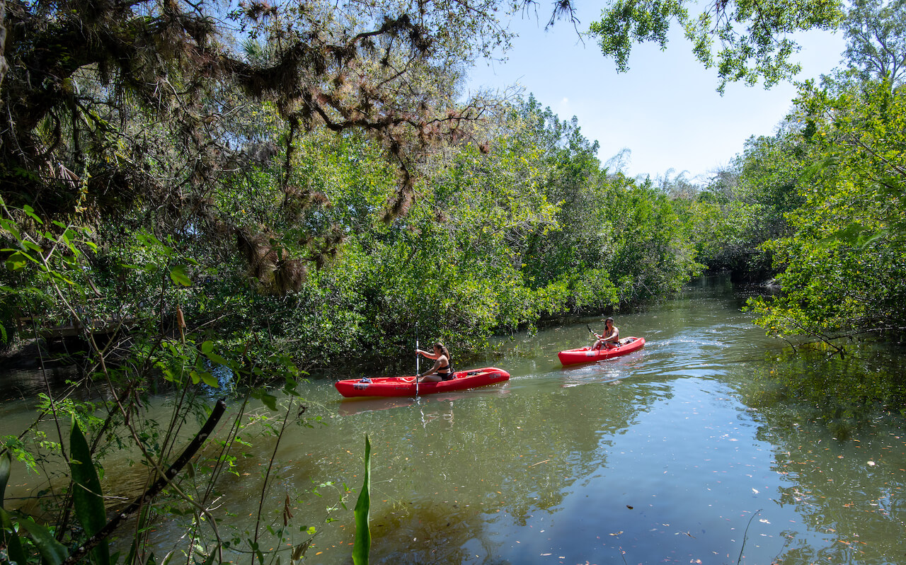 Kayaking Estero River Koreshan State Park near Fort Myers and Naples Florida. Photo by Jennifer Brinkman. Must Do Visitor Guides | MustDo.com