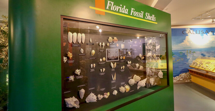 Florida fossil shell display. Bailey-Matthews Shell Museum provides education on shells and mollusks (the shell makers) with exhibits, programs and more for kids and adults. This top Sanibel, Florida attraction is considered the most comprehensive shell museum in the western hemisphere! Photo by Nita Ettinger. Must Do Visitor Guides | MustDo.com