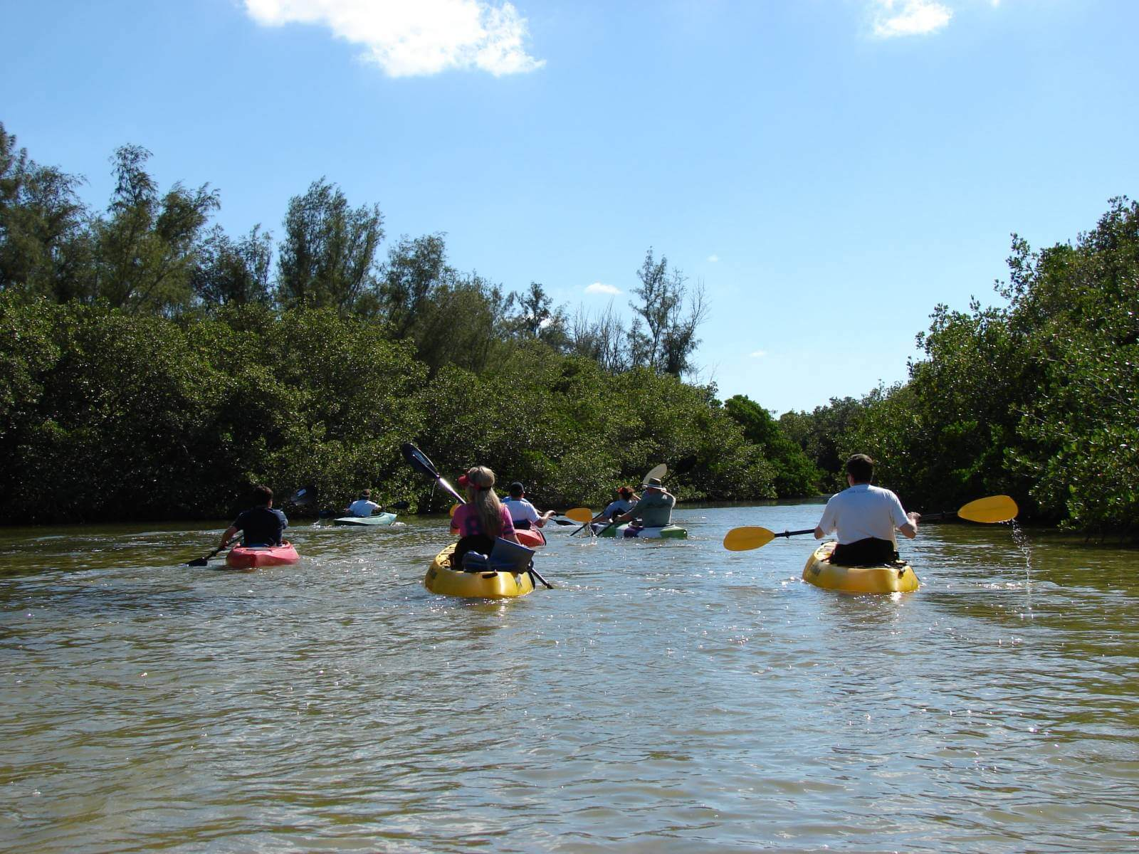 Rent a kayak or paddle through mangroves & Little Sarasota Bay before stopping at a secluded Gulf of Mexico Beach on a guided kayak tour in Siesta Key, Florida with Ride and Paddle.