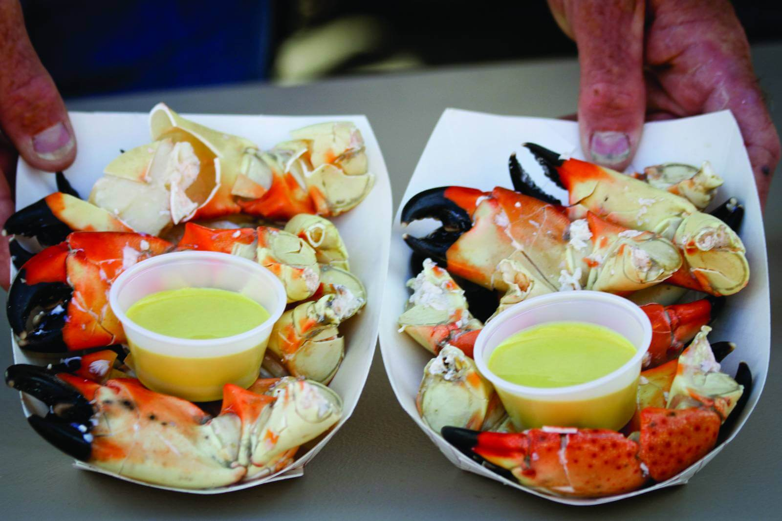 Fresh stone crab claws with mustard and butter. Everglades City, Florida Stone Crab Festival.