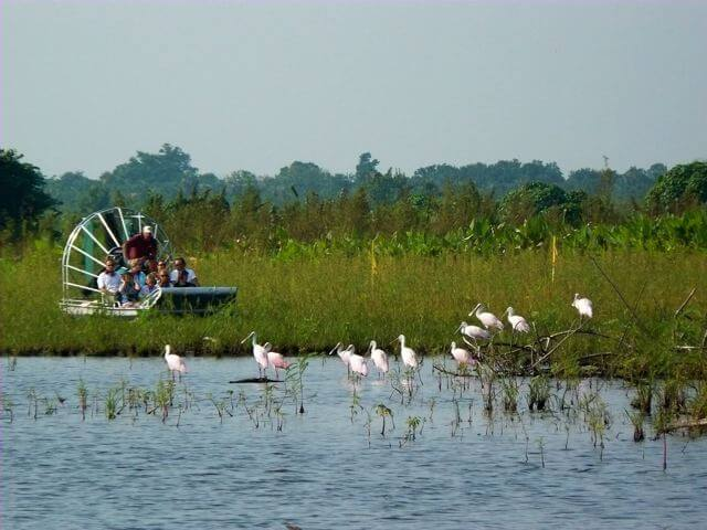Learn about wildlife and conservation on an airboat tour with Everglades Excursions near Marco Island, Florida.