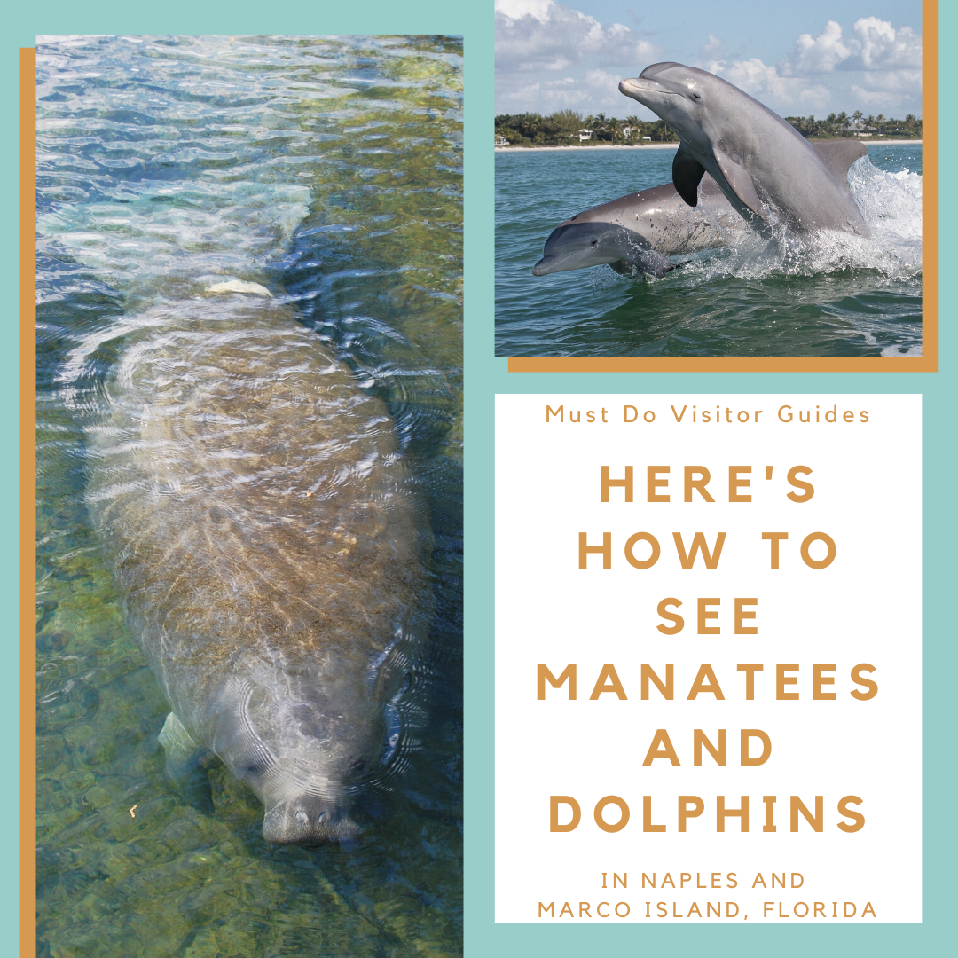 Here's How To See Manatees And Dolphins in Naples and Marco Island, Florida. Must Do Visitor Guides | MustDo.com