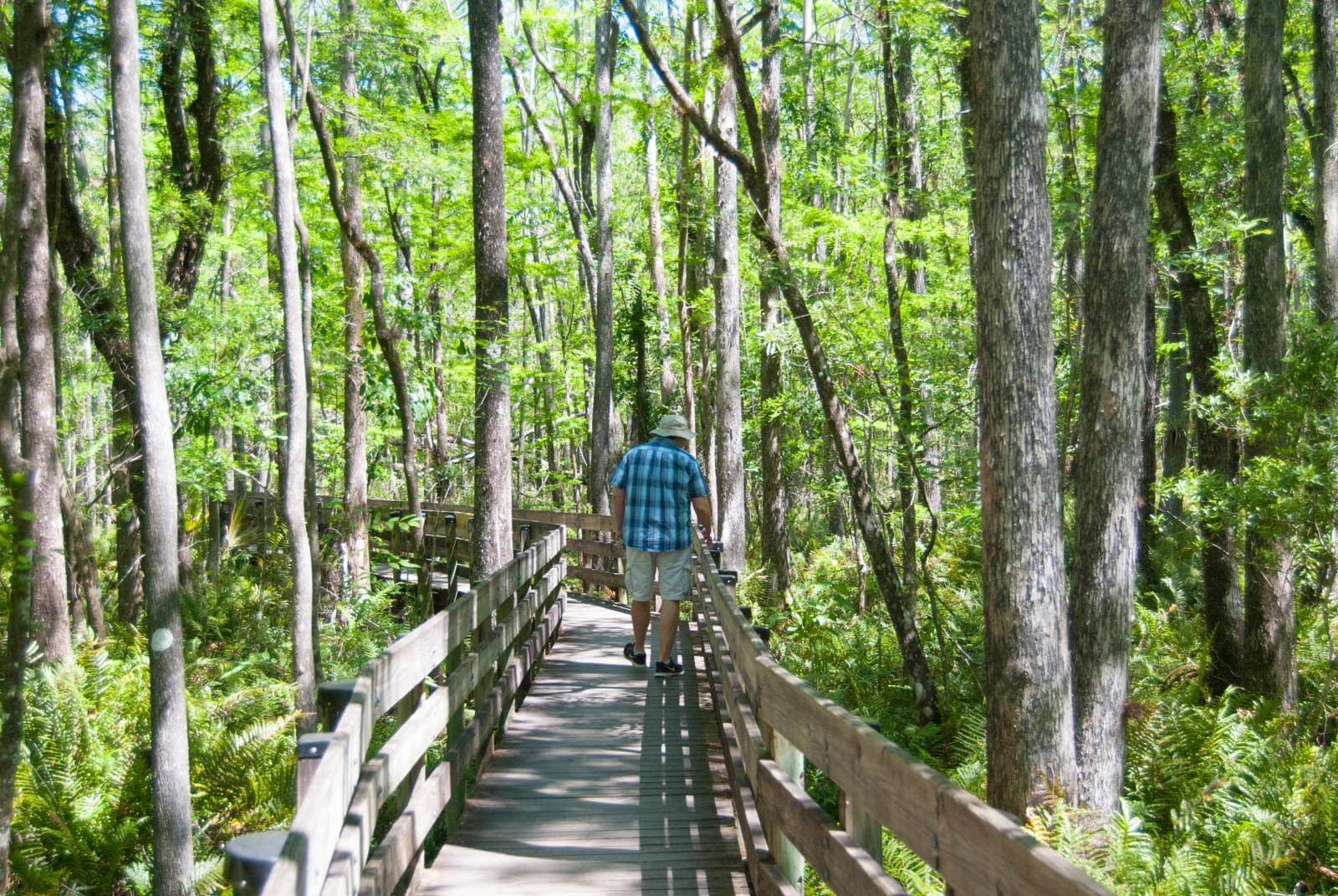 4 Easy Naples, Florida Hikes - Elevated boardwalk at Six Mile Cypress Slough Preserve in Fort Myers. Must Do Visitor Guides | MustDo.com