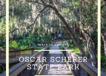 Ways to Explore Oscar Scherer State Park near Venice and Sarasota, Florida. Must Do Visitor Guides | MustDo.com