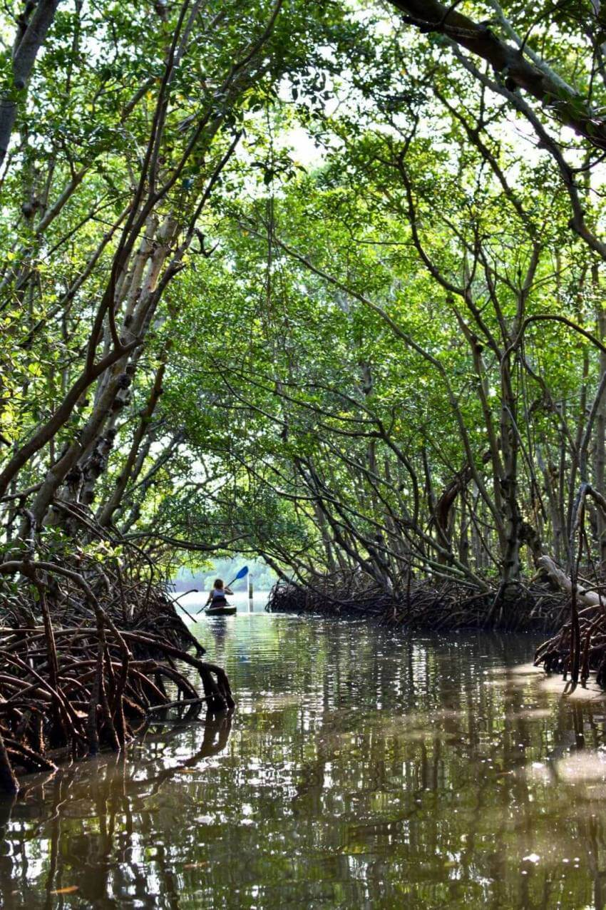 Lido Key Mangrove Tunnels Kayak Tour Sarasota, Florida. Take a Kayaking SRQ guided eco tour of the mangrove tunnels at Ted Sperling Park at South Lido Key in Sarasota, Florida. A favorite tour for all ages—great for the beginner or experienced paddler. Photo credit Andrew Fabian. Must Do Visitor Guides   MustDo.com