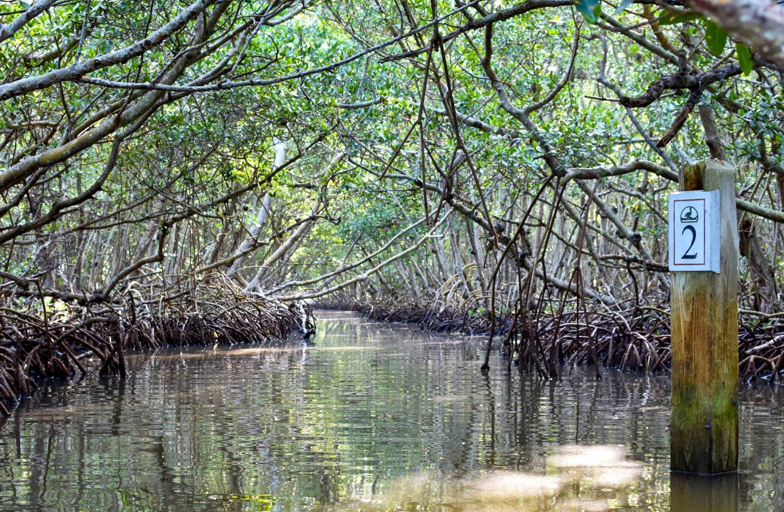 Take a serene guided eco tour of the mangrove tunnels at Ted Sperling Park at South Lido Key in Sarasota, Florida. A favorite tour for all ages—great for the beginner or experienced paddler. Photo credit Andrew Fabian. Must Do Visitor Guides | MustDo.com