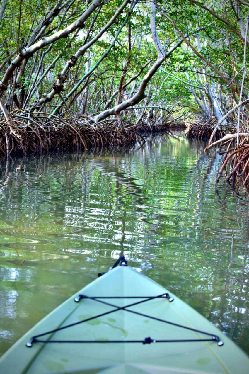 Lido Key Mangrove Tunnels Kayak Tour Sarasota, Florida. Take a Kayaking SRQ guided eco tour of the mangrove tunnels at Ted Sperling Park at South Lido Key in Sarasota, Florida. A favorite tour for all ages—great for the beginner or experienced paddler. Photo credit Andrew Fabian. Must Do Visitor Guides | MustDo.com