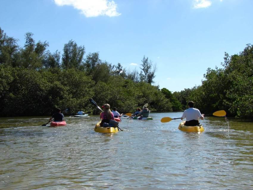 Kayak tour in Sarasota Bay near Siesta Key, Florida.
