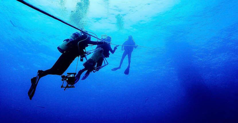 Mote Marine Laboratory research dive. Sarasota, Florida