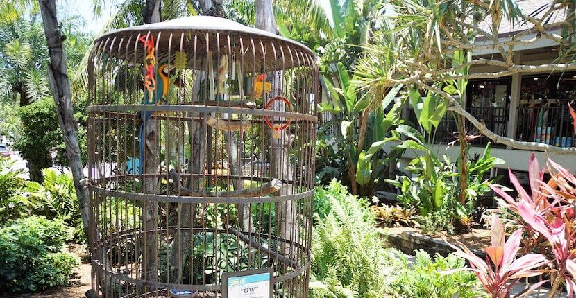 Parrot at Jerry's Foods in Sanibel Island, Florida.