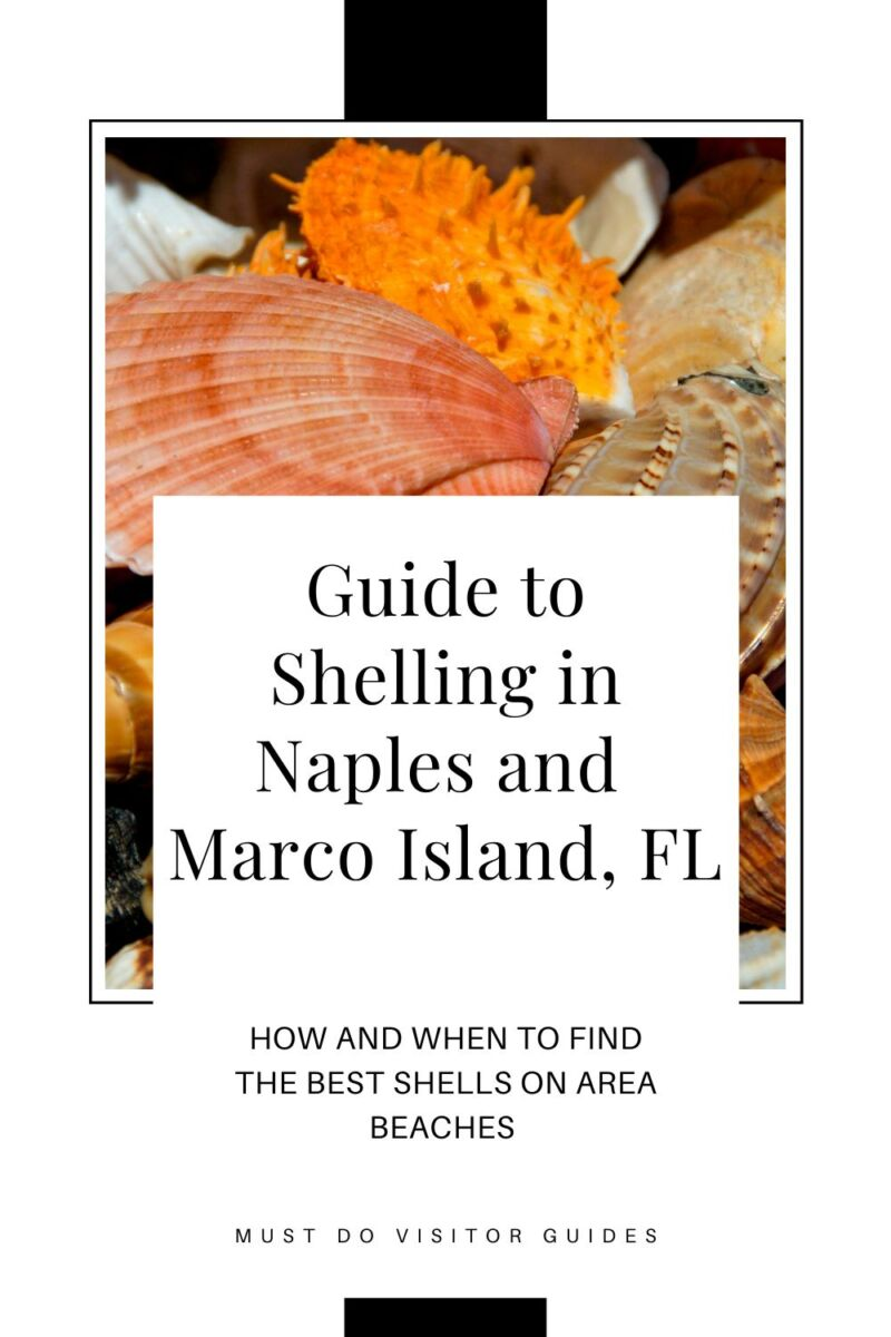 Guide to Shelling in Naples & Marco Island, Florida. How and when to find the best shells on area beaches. Must Do Visitor Guides