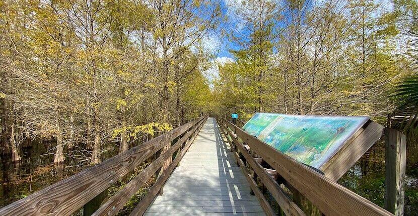 Elevated boardwalk trail Six Mile Cypress Slough Preserve Fort Myers, Florida.