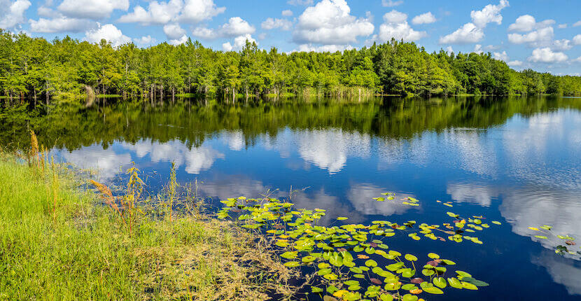 Blue sky with white clouds reflecting in Gator Lake on a summer day in Six Mile Cypress Slough Preserve in Fort Myers Florida.